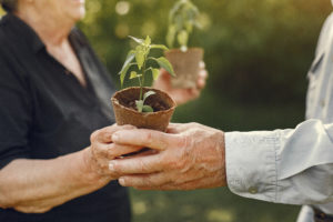 Idosos fazendo jardinagem. Homem velho pegando uma muda de planta com uma mulher velha.